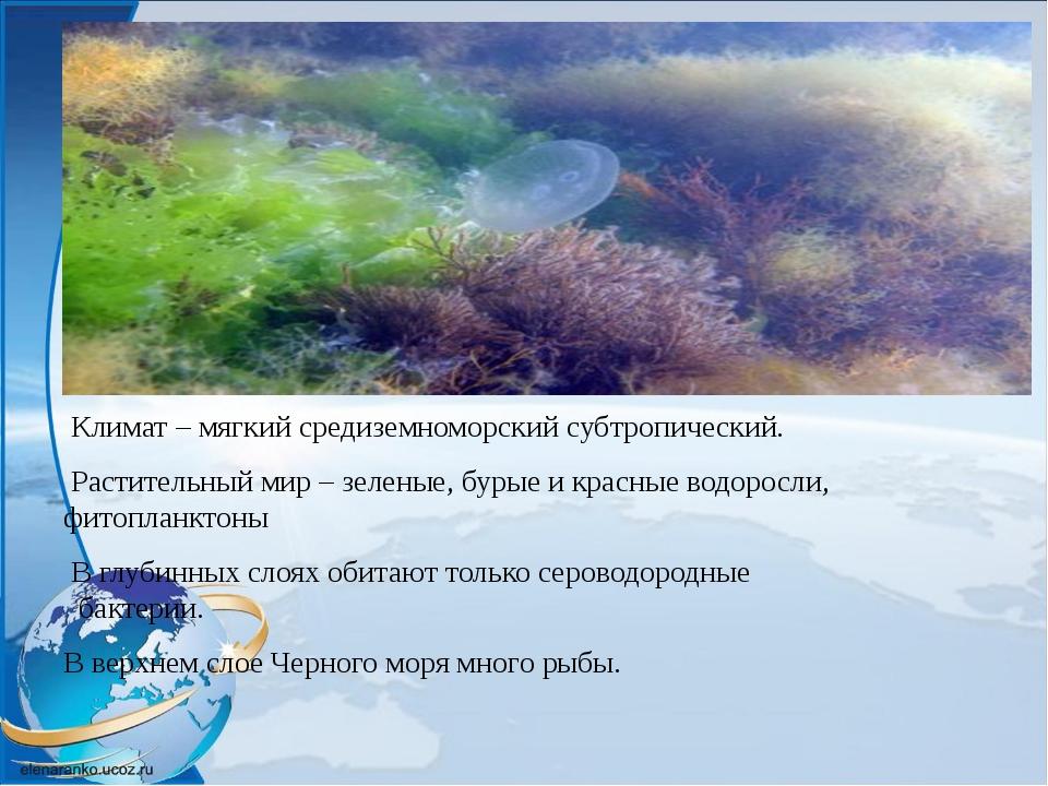 Климат – мягкий средиземноморский субтропический. Растительный мир – зеленые...