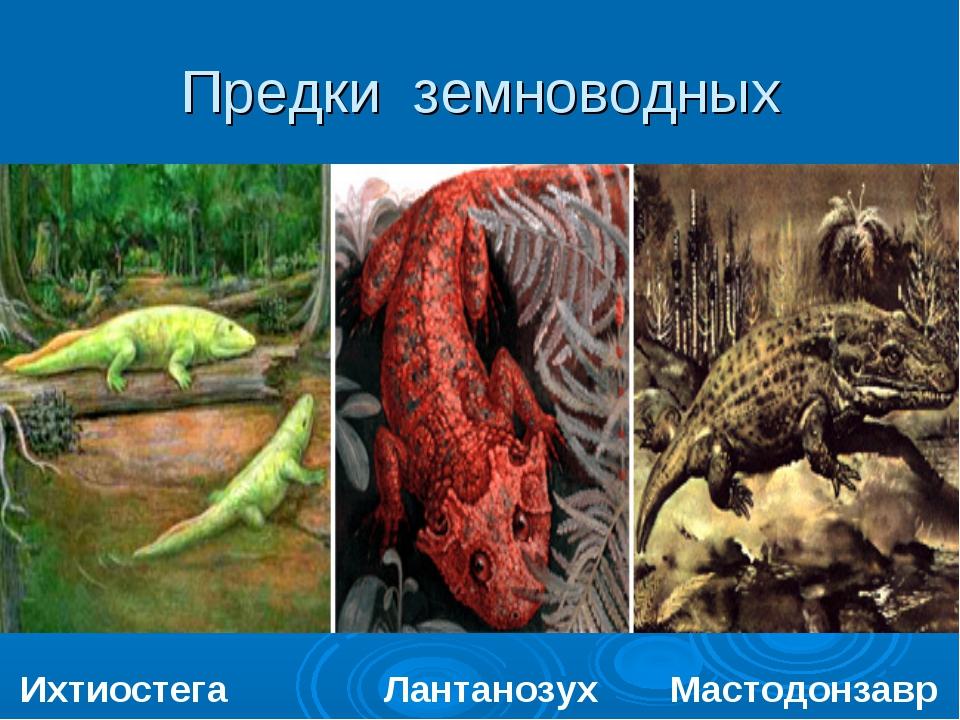 Предки земноводных Ихтиостега Лантанозух Мастодонзавр