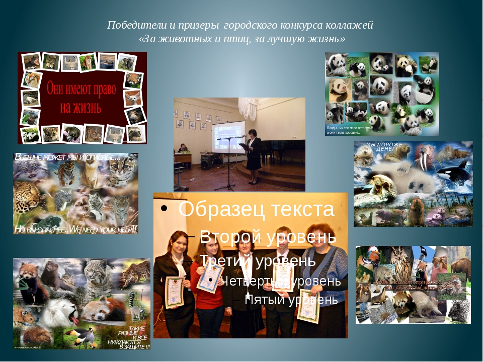 Победители и призеры городского конкурса коллажей «За животных и птиц, за луч...