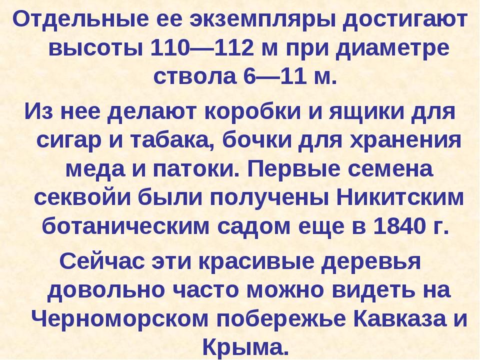 Отдельные ее экземпляры достигают высоты 110—112 м при диаметре ствола 6—11 м...