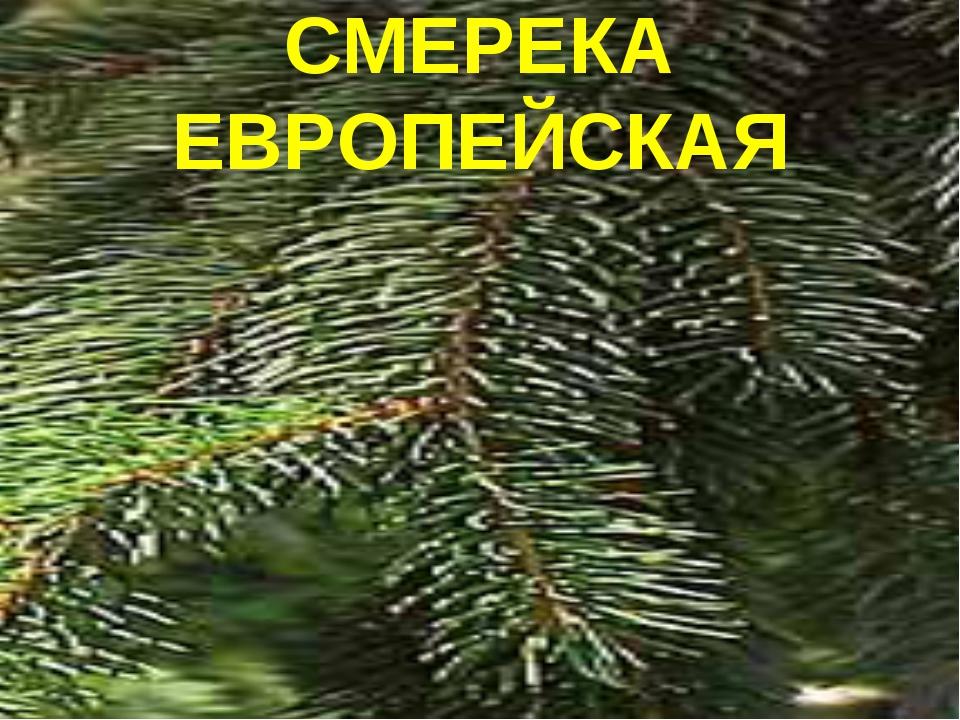 СМЕРЕКА ЕВРОПЕЙСКАЯ