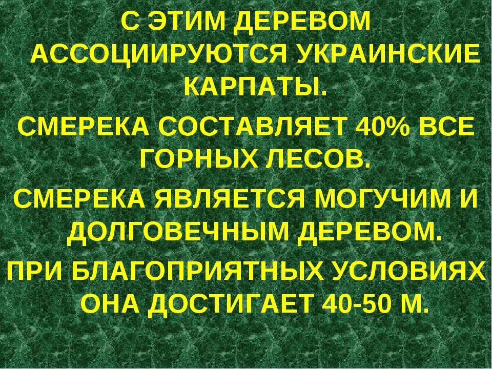 С ЭТИМ ДЕРЕВОМ АССОЦИИРУЮТСЯ УКРАИНСКИЕ КАРПАТЫ. СМЕРЕКА СОСТАВЛЯЕТ 40% ВСЕ Г...