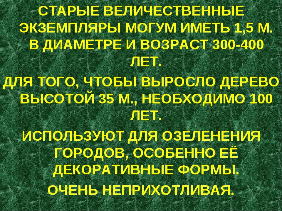 СТАРЫЕ ВЕЛИЧЕСТВЕННЫЕ ЭКЗЕМПЛЯРЫ МОГУМ ИМЕТЬ 1,5 М. В ДИАМЕТРЕ И ВОЗРАСТ 300-...
