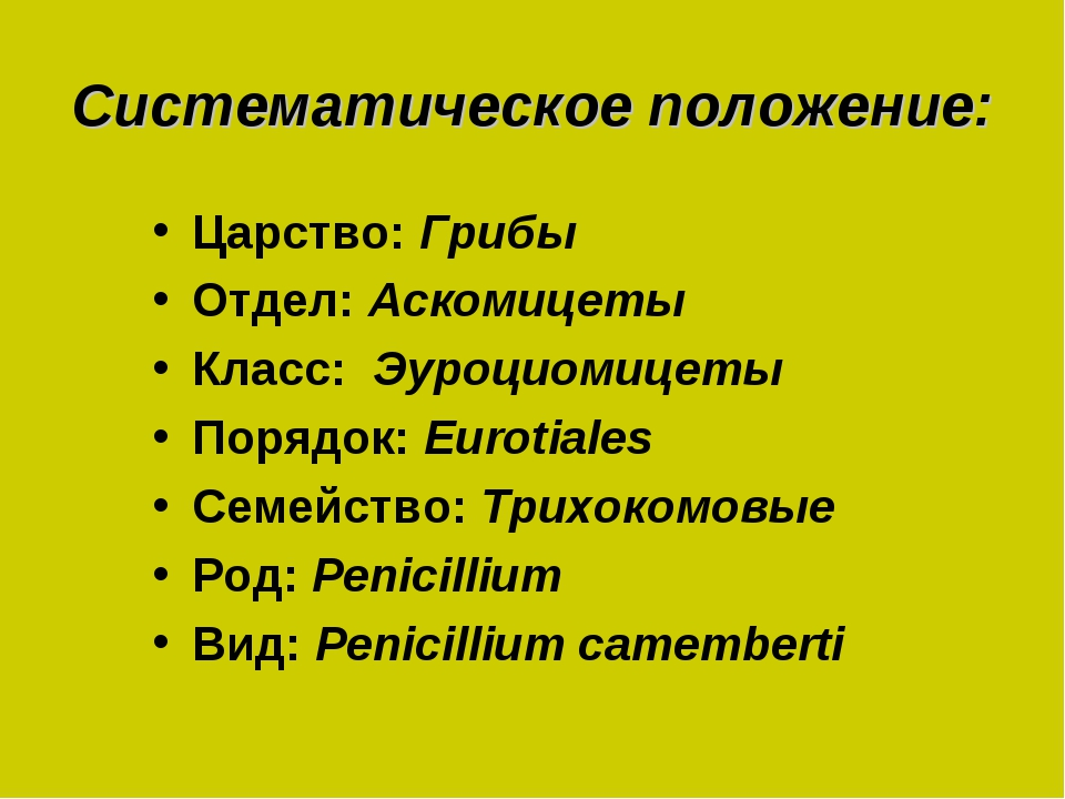 Систематическое положение: Царство: Грибы Отдел: Аскомицеты Класс: Эуроциомиц...