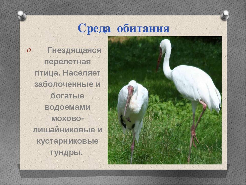 Среда обитания Гнездящаяся перелетная птица. Населяет заболоченные и богатые...