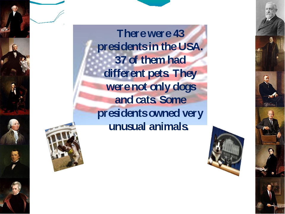 There were 43 presidents in the USA. 37 of them had different pets. They were...