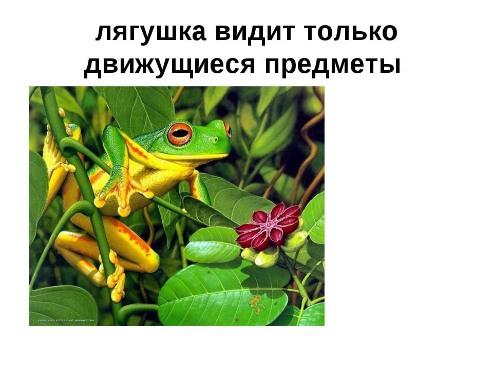 лягушка видит только движущиеся предметы