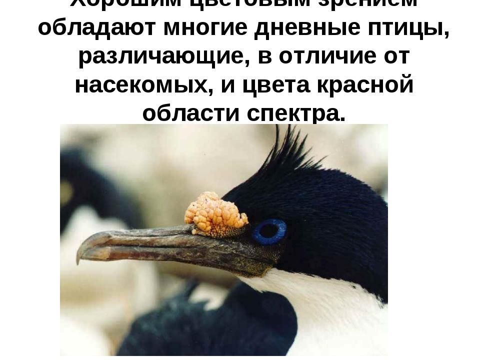 Хорошим цветовым зрением обладают многие дневные птицы, различающие, в отличи...