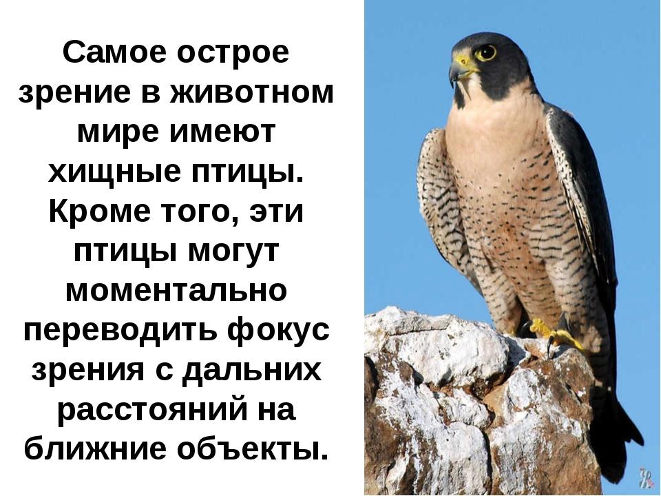 Самое острое зрение в животном мире имеют хищные птицы. Кроме того, эти птицы...