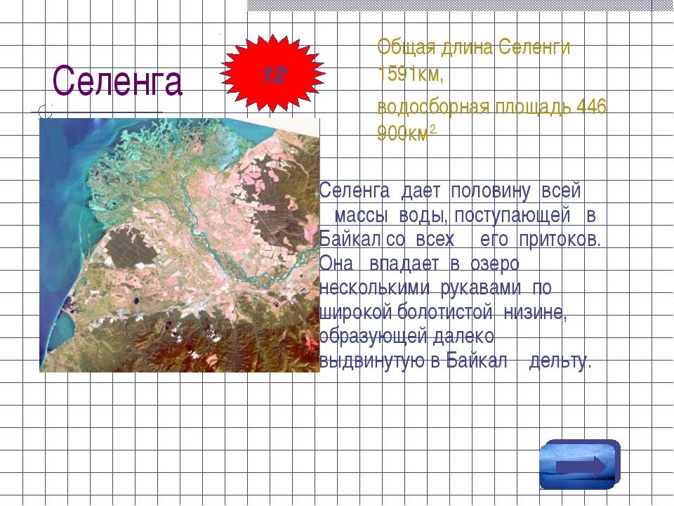 Селенга Селенга дает половину всей массы воды, поступающей в Байкал со всех е...