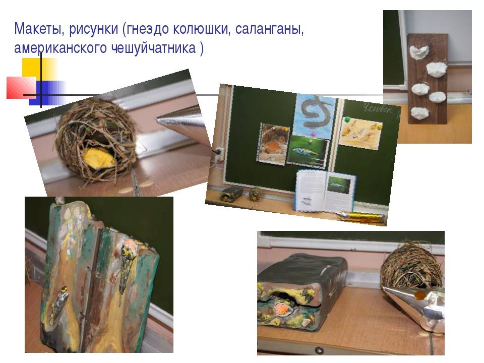 Макеты, рисунки (гнездо колюшки, саланганы, американского чешуйчатника )