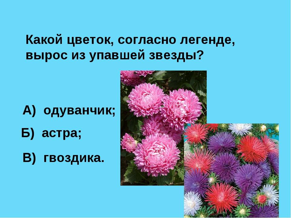 Какой цветок, согласно легенде, вырос из упавшей звезды? А) одуванчик; Б) аст...