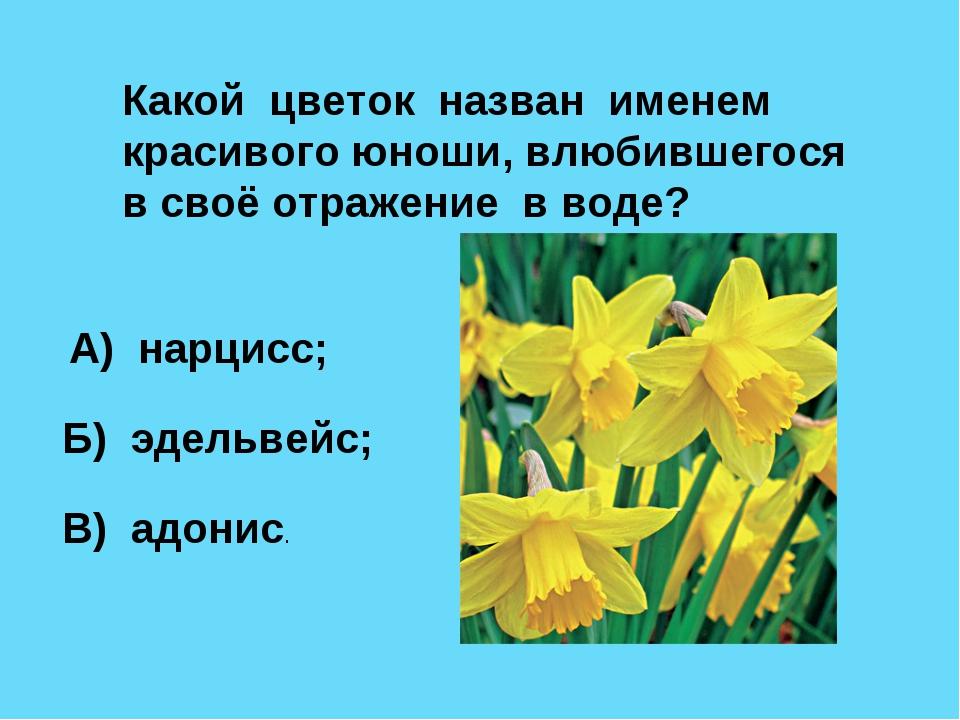 Какой цветок назван именем красивого юноши, влюбившегося в своё отражение в в...