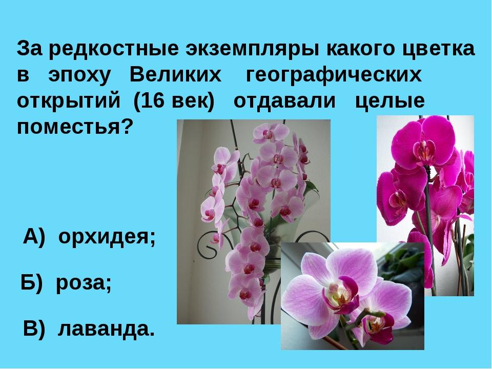 За редкостные экземпляры какого цветка в эпоху Великих географических открыти...