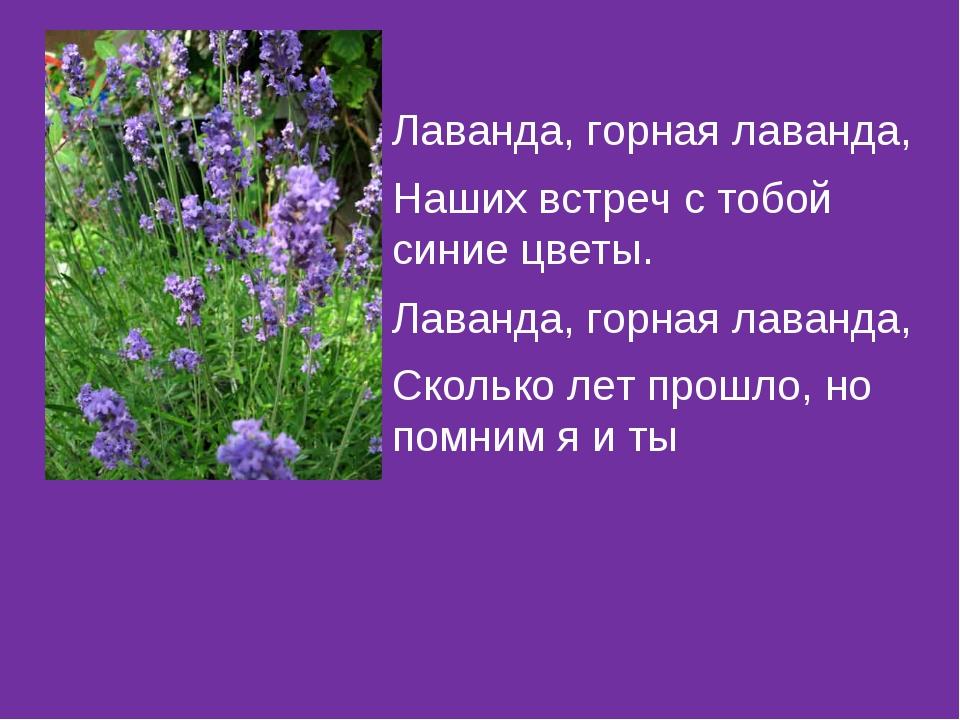Лаванда, горная лаванда, Наших встреч с тобой синие цветы. Лаванда, горная ла...