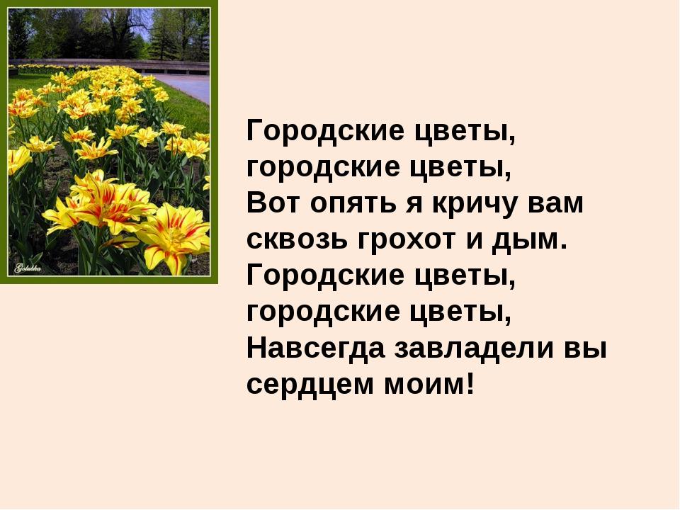 Городские цветы, городские цветы, Вот опять я кричу вам сквозь грохот и дым....