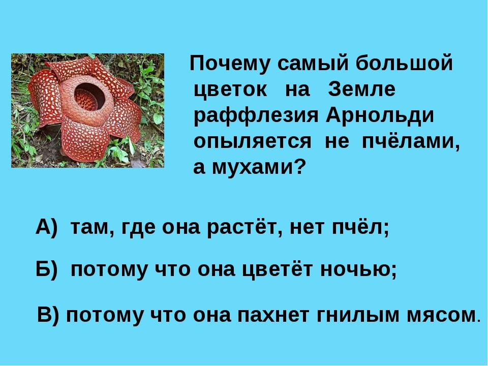 Почему самый большой цветок на Земле раффлезия Арнольди опыляется не пчёлами...