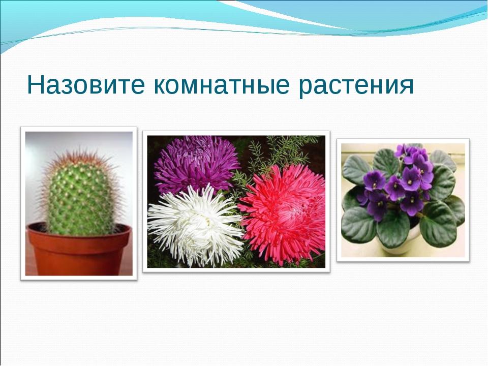 Назовите комнатные растения