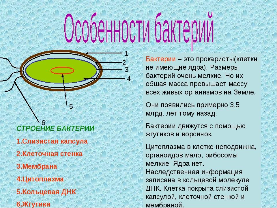 1 2 3 4 6 5 Бактерии – это прокариоты(клетки не имеющие ядра). Размеры бактер...