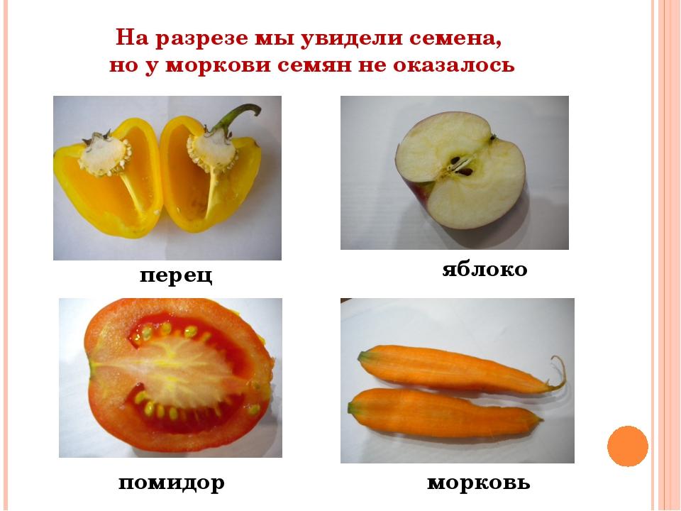 На разрезе мы увидели семена, но у моркови семян не оказалось перец яблоко по...