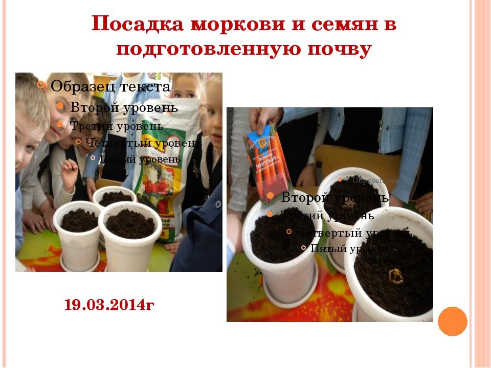Посадка моркови и семян в подготовленную почву 19.03.2014г
