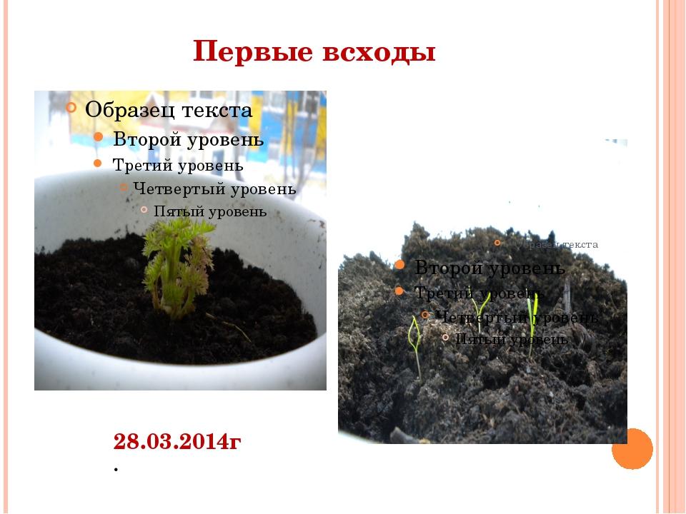 Первые всходы 28.03.2014г.