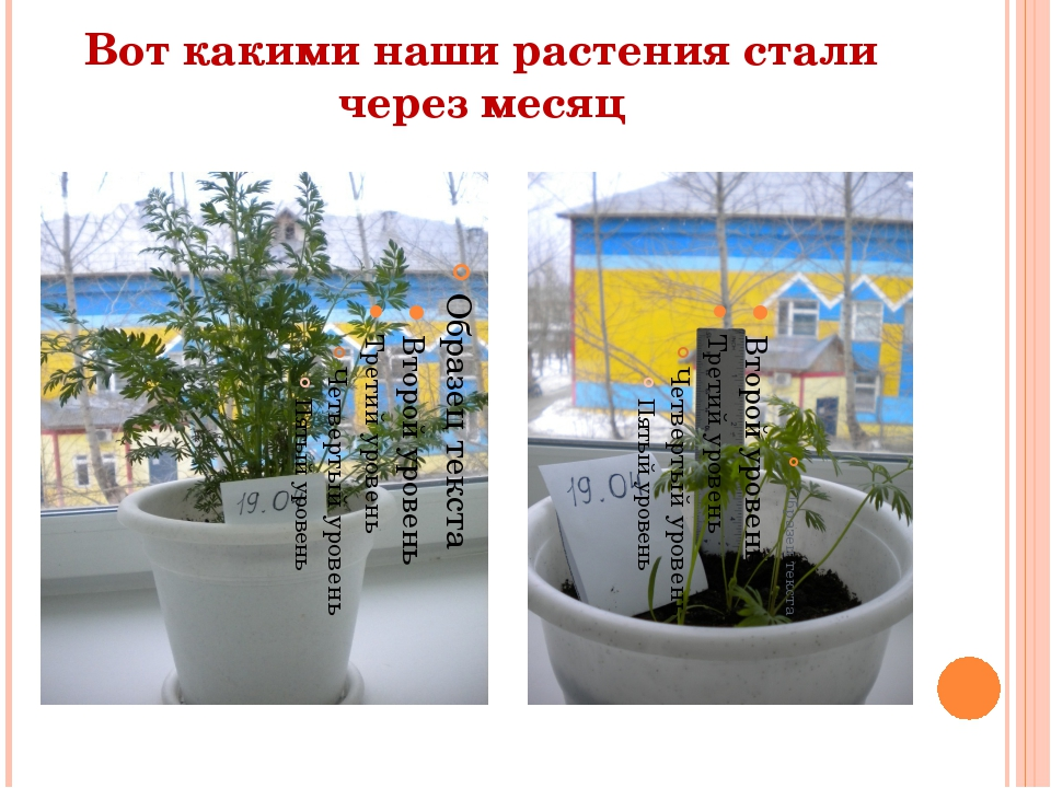 Вот какими наши растения стали через месяц