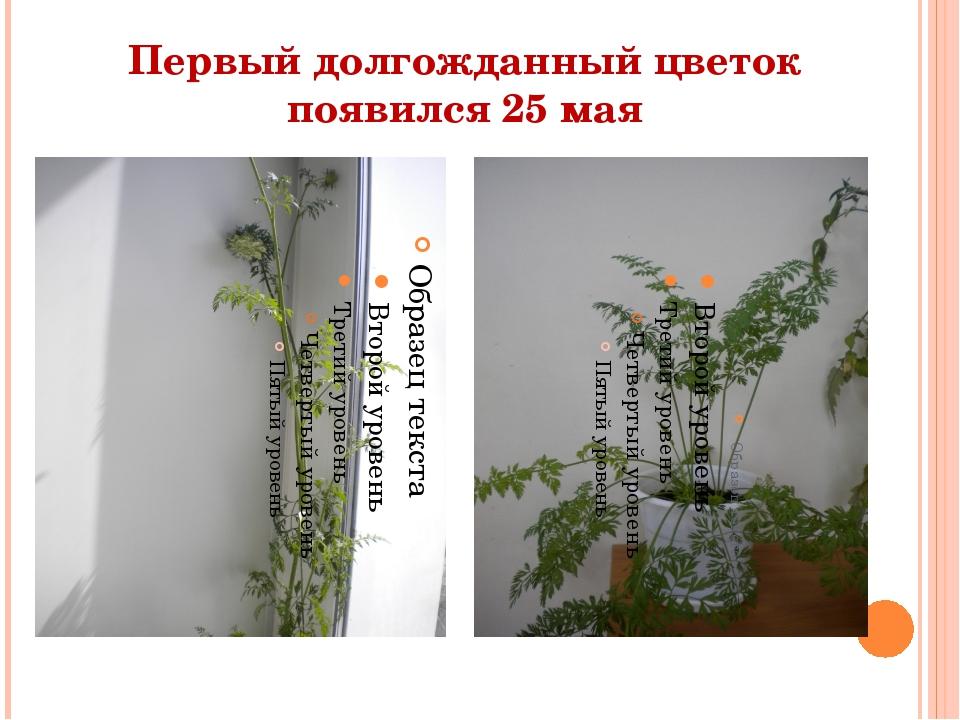 Первый долгожданный цветок появился 25 мая