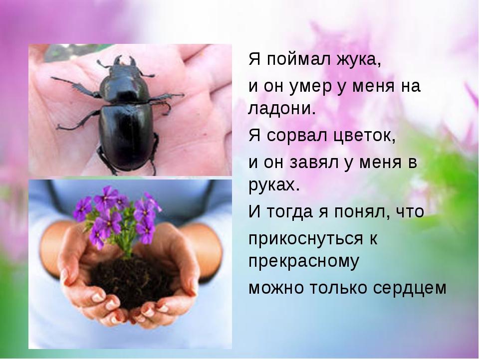 Я поймал жука, и он умер у меня на ладони. Я сорвал цветок, и он завял у меня...