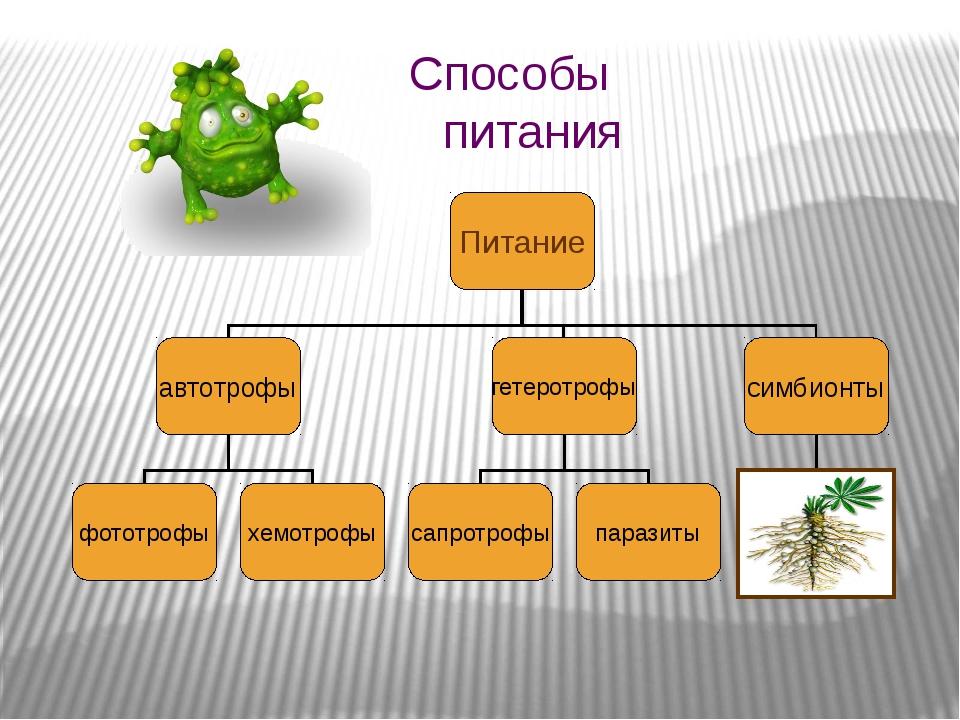 Способы питания Питание автотрофы гетеротрофы симбионты фототрофы хемотрофы с...
