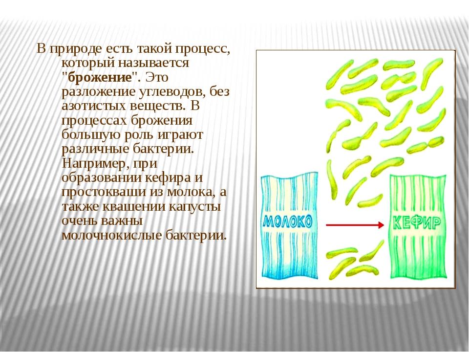 """В природе есть такой процесс, который называется """"брожение"""". Это разложение..."""