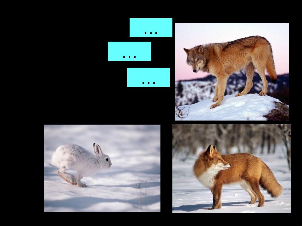 Голоден как волк Хитёр как лиса Труслив как заяц … … …