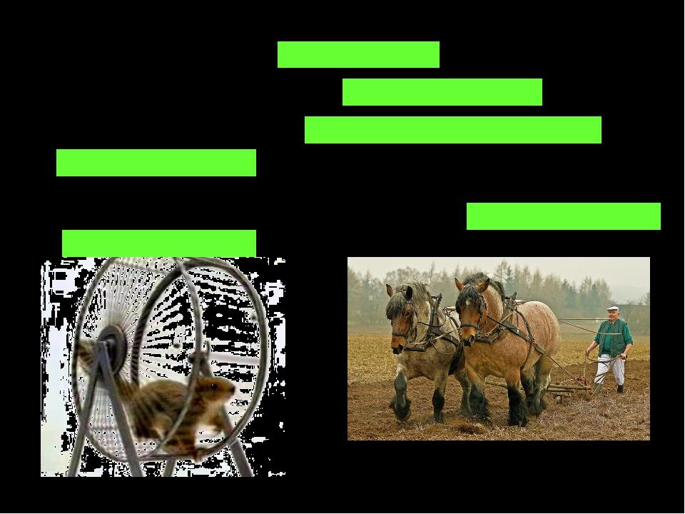 не в коня корм – мало толку работать как лошадь- много работать медвежья услу...