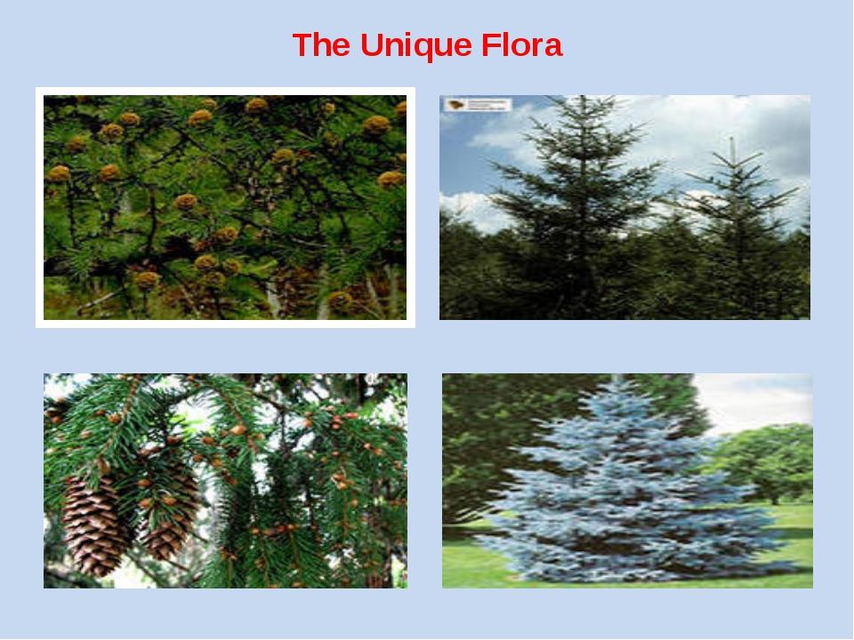The Unique Flora