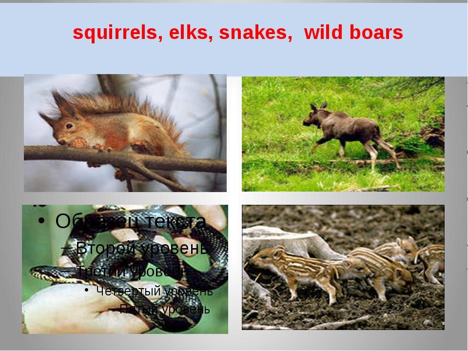 squirrels, elks, snakes, wild boars