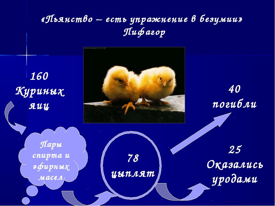 «Пьянство – есть упражнение в безумии» Пифагор 160 Куриных яиц 78 цыплят 4...