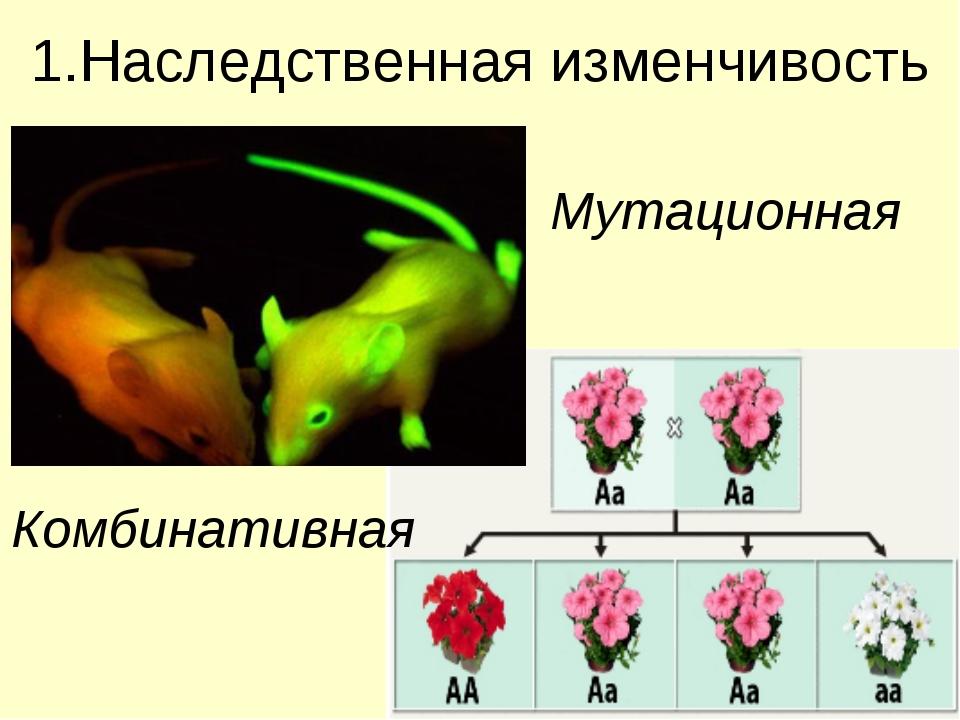 1.Наследственная изменчивость Мутационная Комбинативная