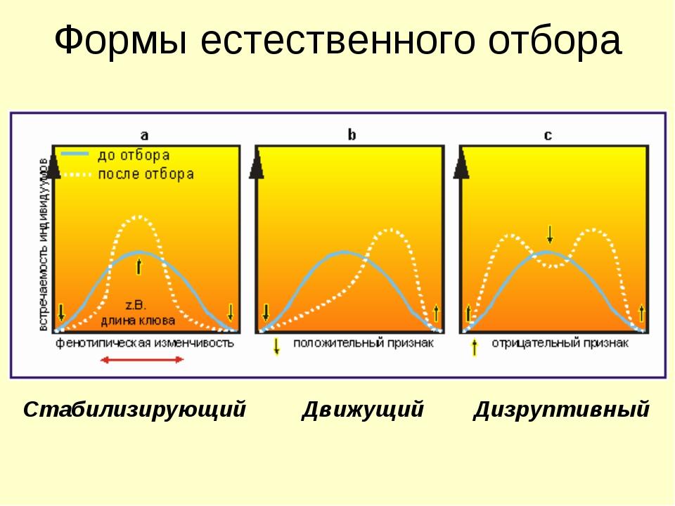 Формы естественного отбора Стабилизирующий Движущий Дизруптивный