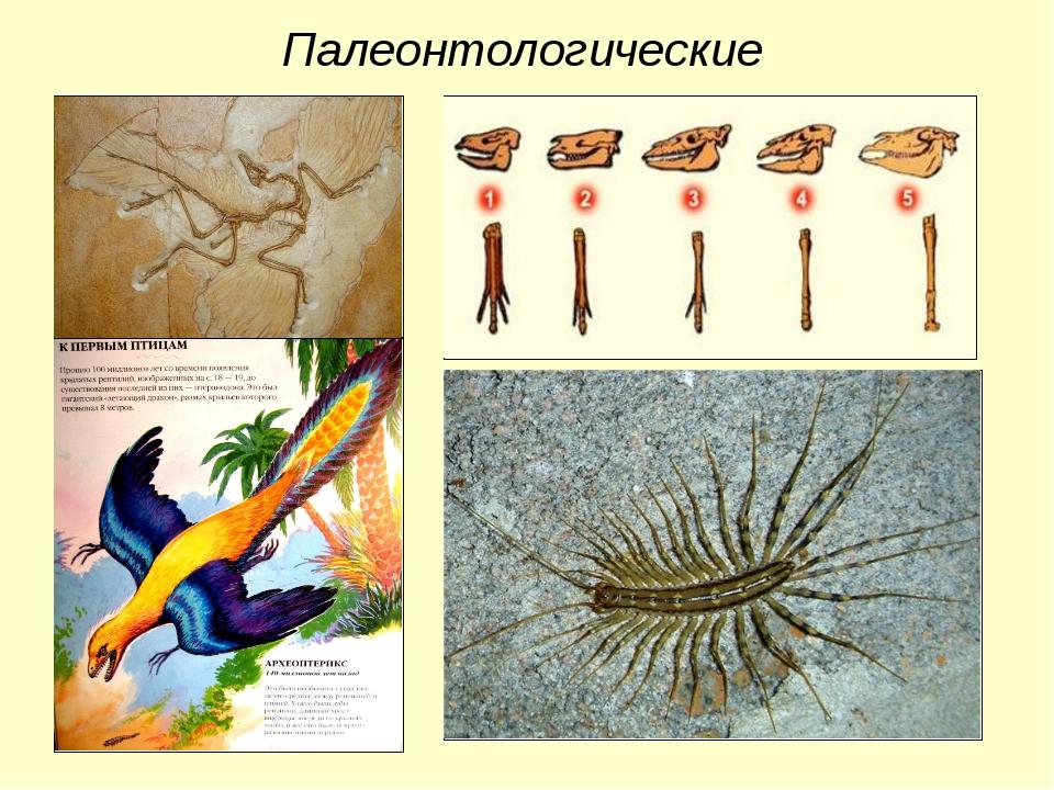 Палеонтологические