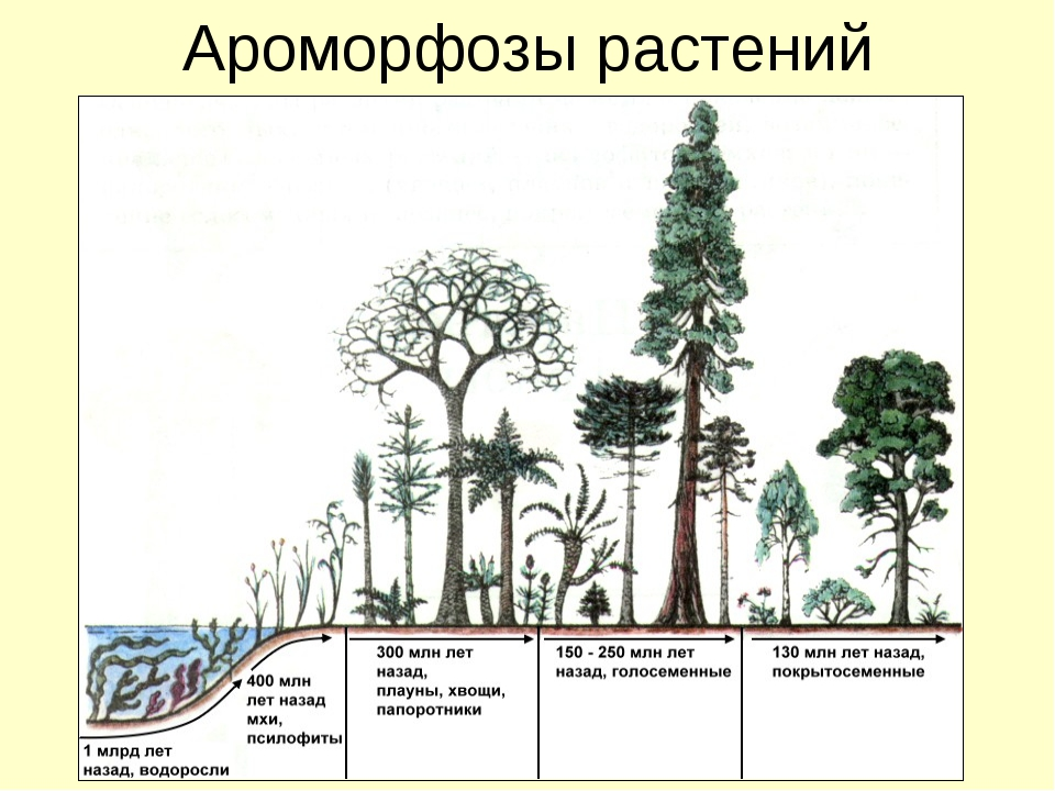 Ароморфозы растений