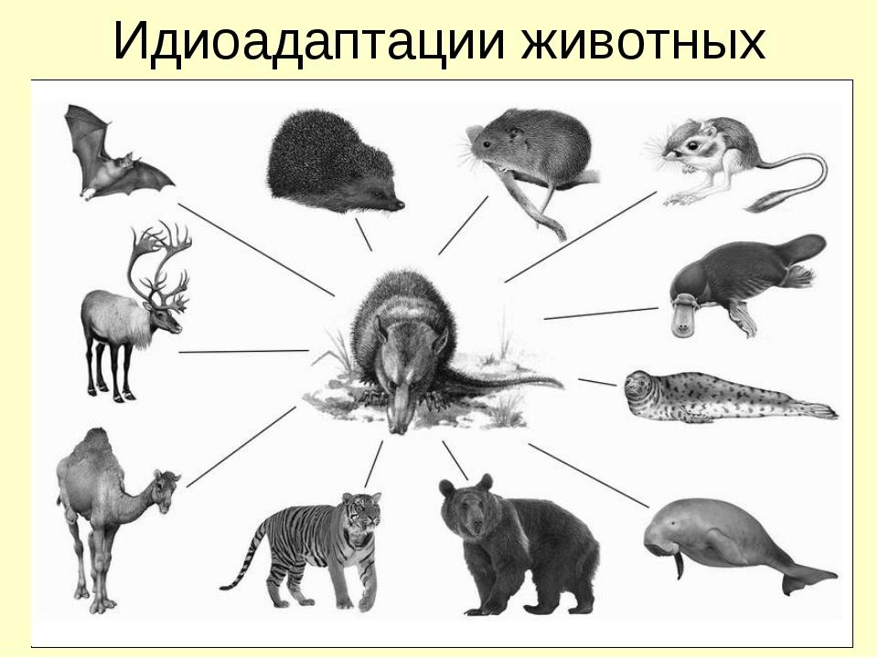 Идиоадаптации животных