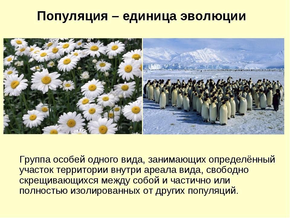 Группа особей одного вида, занимающих определённый участок территории внутри...
