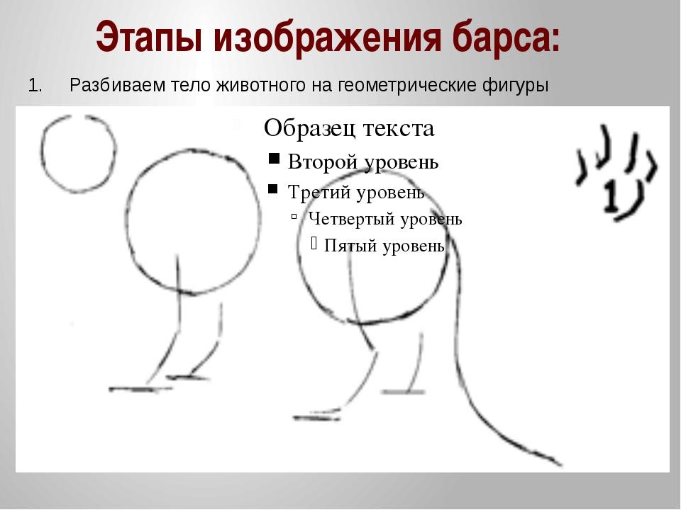Этапы изображения барса: 1. Разбиваем тело животного на геометрические фигуры