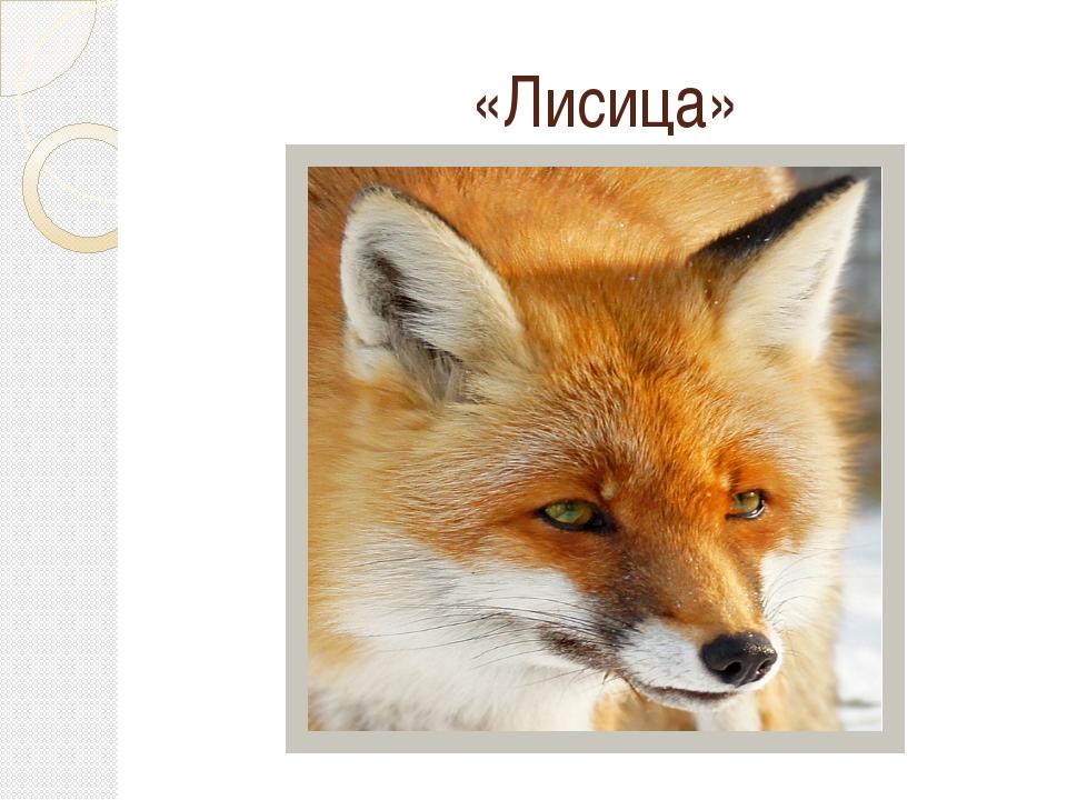 «Лисица»