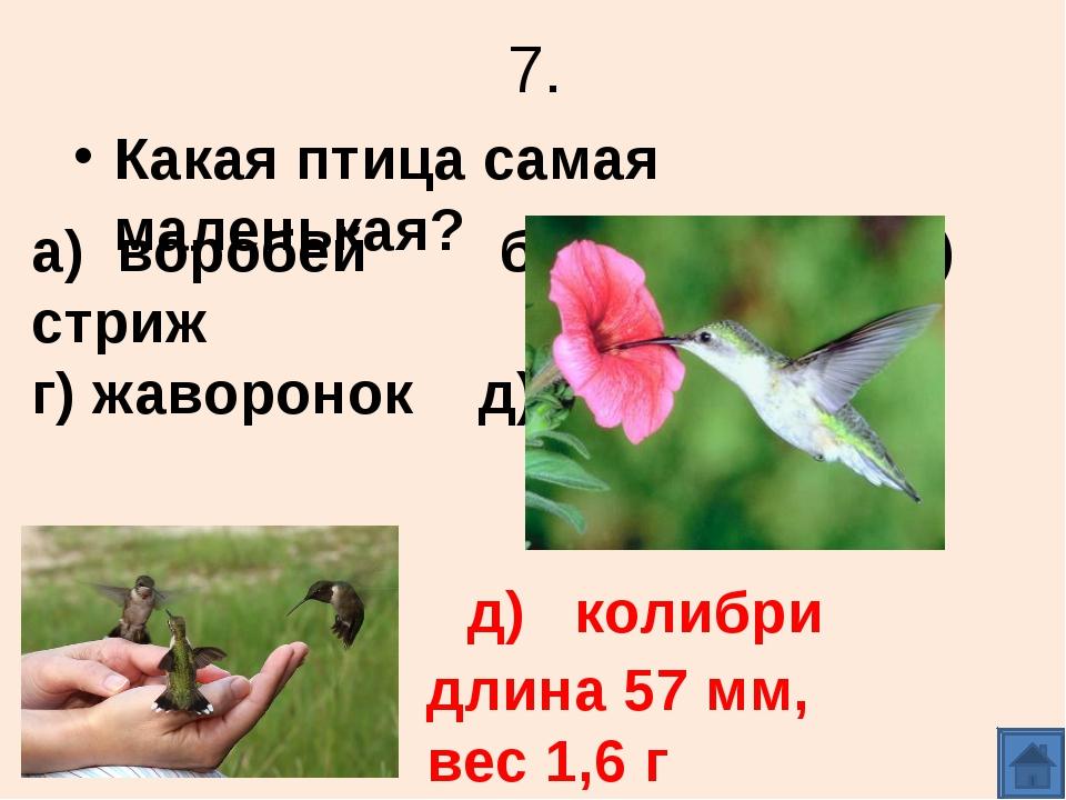 7. Какая птица самая маленькая? а) воробей б) синица в) стриж г) жаворонок д)...