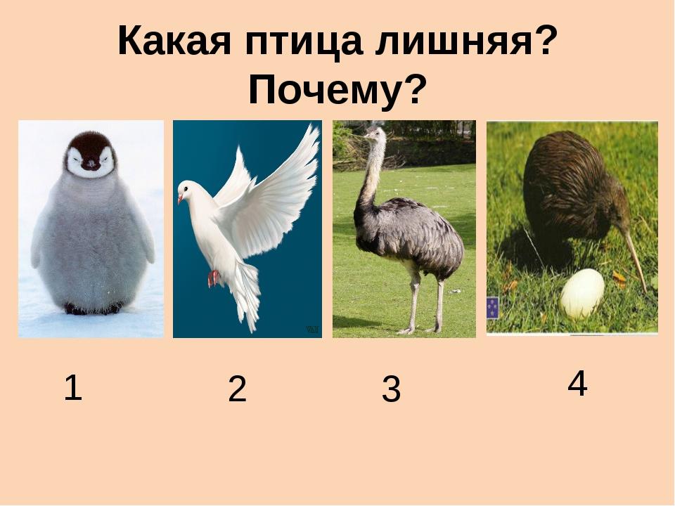 Какая птица лишняя? Почему? 1 2 3 4
