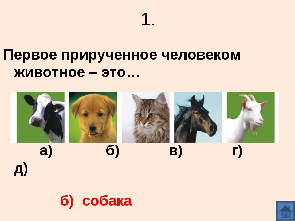 1. Первое прирученное человеком животное – это… а) б) в) г) д) б) собака