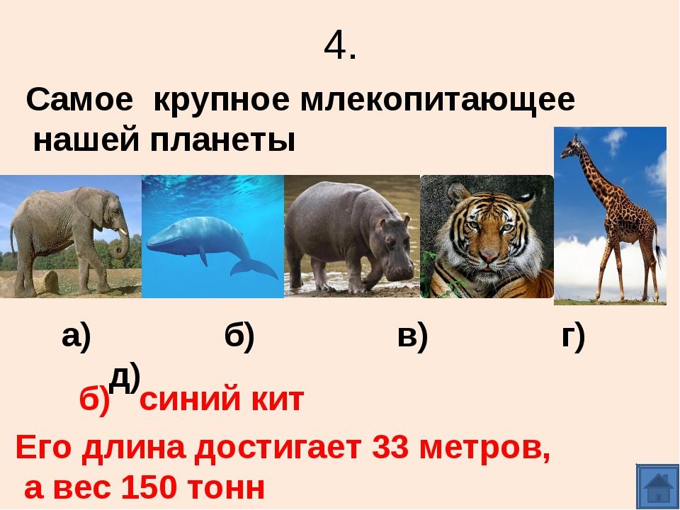 4. Самое крупное млекопитающее нашей планеты а) б) в) г) д) б) синий кит Его...