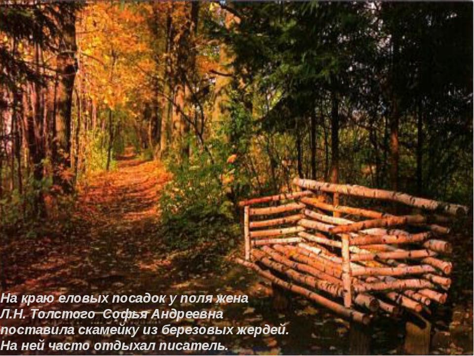 На краю еловых посадок у поля жена Л.Н. Толстого Софья Андреевна поставила ск...