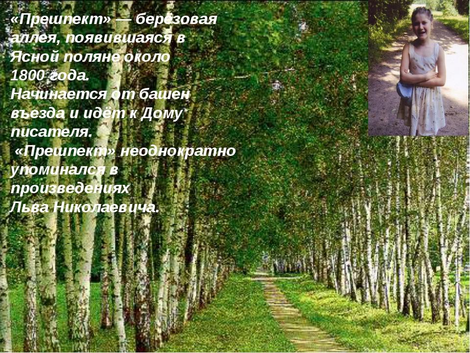 «Прешпект»— берёзовая аллея, появившаяся в Ясной поляне около 1800 года. На...